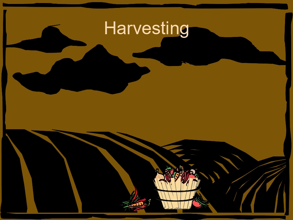 harvesting-metaphor-6